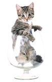 chaton Photographie stock libre de droits