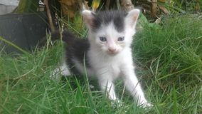 Chaton Photo libre de droits