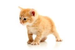 chaton assez petit images libres de droits
