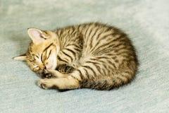 Chaton avec des rayures de tigre sur le divan bleu photographie stock