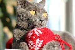 Chaton avec la boule de Noël Image stock