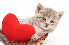 Chaton avec le coeur de jouet Photo libre de droits