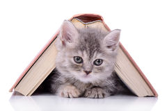 Chaton avec le livre Photo stock