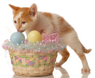 Chaton avec le panier de Pâques Images stock