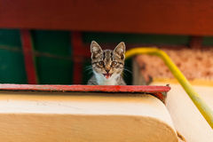 Chaton baîllant Photographie stock libre de droits