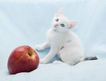 Chaton blanc à côté de pomme rouge Image libre de droits