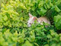 Chaton blanc abandonné avec des yeux de tristesse dans le jardin image libre de droits