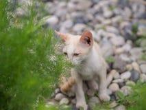 Chaton blanc abandonné avec des yeux de tristesse dans le jardin photographie stock libre de droits