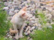 Chaton blanc abandonné avec des yeux de tristesse dans le jardin images libres de droits