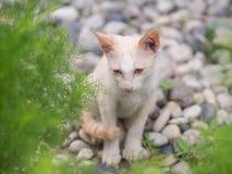 Chaton blanc abandonn? avec des yeux de tristesse dans le jardin images libres de droits