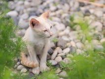 Chaton blanc abandonn? avec des yeux de tristesse dans le jardin photos stock