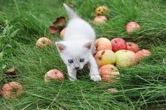 Chaton blanc dans l'herbe Photographie stock libre de droits