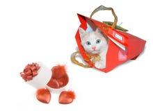 Chaton blanc en paquet rouge et boîte ronde blanche Photos libres de droits
