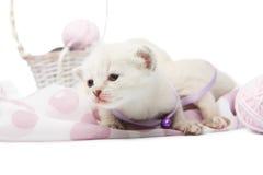Chaton blanc mignon avec les boules de laine de fil Photos stock