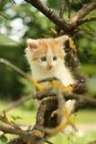 Chaton blanc mignon se reposant sur les branches d'arbre Image stock