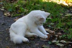 Chaton blanc se reposant dans l'herbe verte sur la rue photos libres de droits