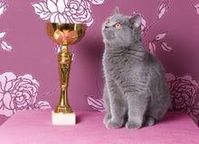 Chaton britannique de shorthair de champion avec une tasse Photographie stock