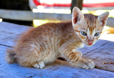 Chaton câlin Image stock