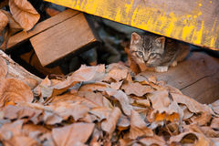 Chaton curieux Images stock