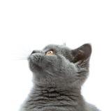 chaton curieux Images libres de droits
