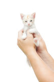 Chaton dans des mains humaines Image stock