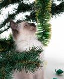 Chaton dans l'arbre Photos libres de droits