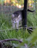 Chaton dans l'herbe Photo stock