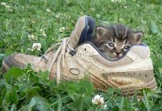Chaton dans la chaussure Images libres de droits