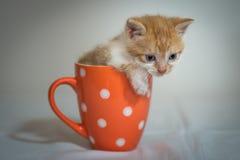 Chaton dans la tasse orange Photos libres de droits