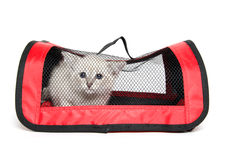 Chaton dans le transporteur d'animal familier Photos libres de droits