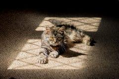 Chaton dans les ombres Photographie stock libre de droits