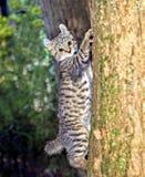 Chaton dans un arbre Image libre de droits