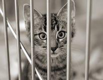 Chaton dans une cage Photos stock