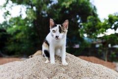 Chaton de chat Photo libre de droits