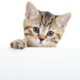 Chaton de chat accrochant au-dessus de l'affiche ou du conseil vide Photos stock