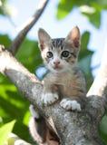 Chaton de chat sur l'arbre Photos libres de droits