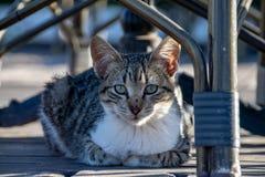 Chaton de chat tigré avec des pattes courbées en se reposant sur le decking sous la table et les chaises en été images stock