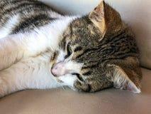 Chaton de chat tigré essayant de dormir images stock