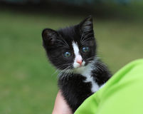 Chaton de CUB images stock