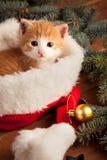 Chaton de gingembre dans le chapeau de Santa dans la perspective de Noël Photo libre de droits