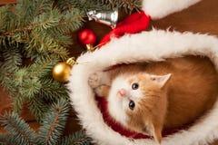 Chaton de gingembre dans le chapeau de Santa dans la perspective de Noël Images stock
