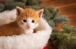 Chaton de gingembre dans le chapeau de Santa dans la perspective de Noël Image stock