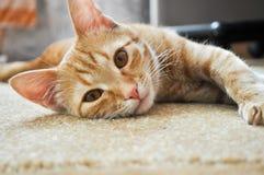 Chaton de gingembre se trouvant sur la couverture de maison regardant l'appareil-photo avec les yeux bruns image stock