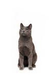 Chaton de gris de Smokey Photographie stock libre de droits