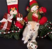 Chaton de Noël Images libres de droits