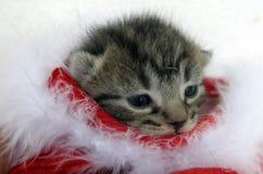 Chaton de Noël Image stock