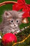 Chaton de Noël Photo stock