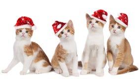 Chaton de Noël Photos libres de droits