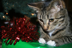 Chaton de Noël. Photos libres de droits