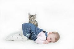 Chaton de Playfull Image stock